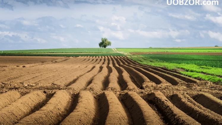 Мораторій на продаж землі не відміняти до президентських виборів 2019, – Держгеокадастр