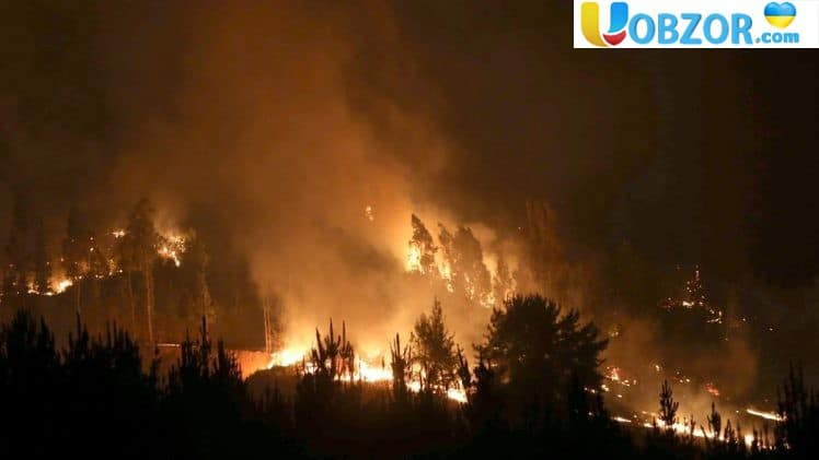 В Арізоні вечірка стала причиною лісової пожежі з мільйонним збитком. +Відео