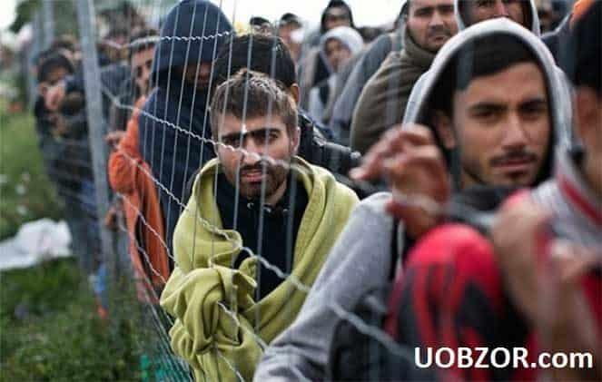 Большинство мигрантов, который просят убежища в Германии без документов