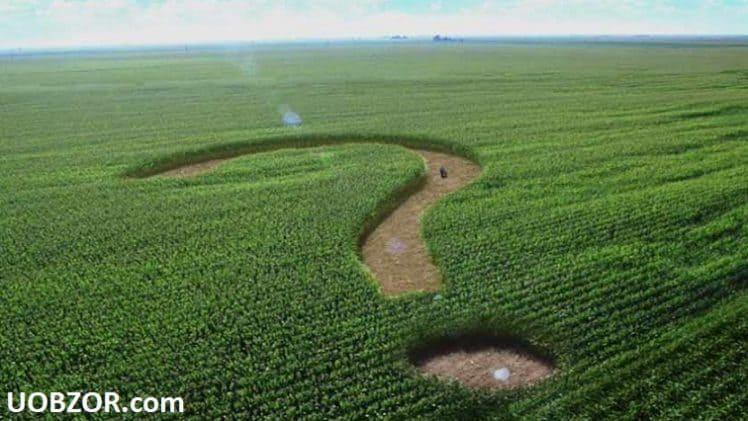 Власть готова снять мораторий на продаж земель сельскохозяйственного назначения