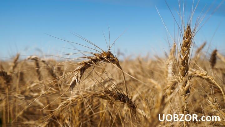 Литовський депутат вимагає припинити імпорт зерна з Росії