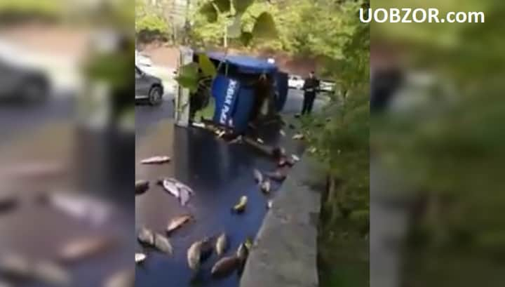 В Ростові перекинулася вантажівка з живими коропами. Відео