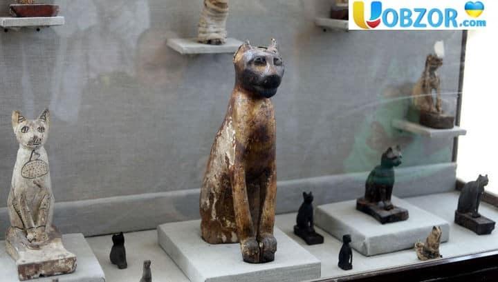 У Єгипті знайдено двісті бальзамованих кішок і перші мумії комах