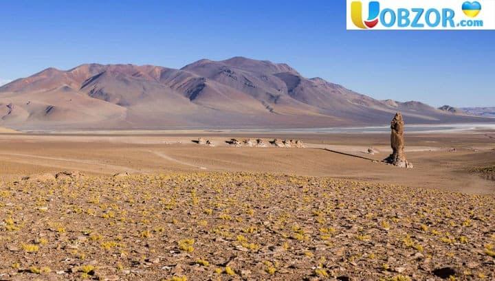 """Дощі в """"марсіанській"""" пустелі Атакама знищили практично все живе"""