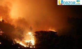 Лісова пожежа в Греції. Число жертв зросло до 100