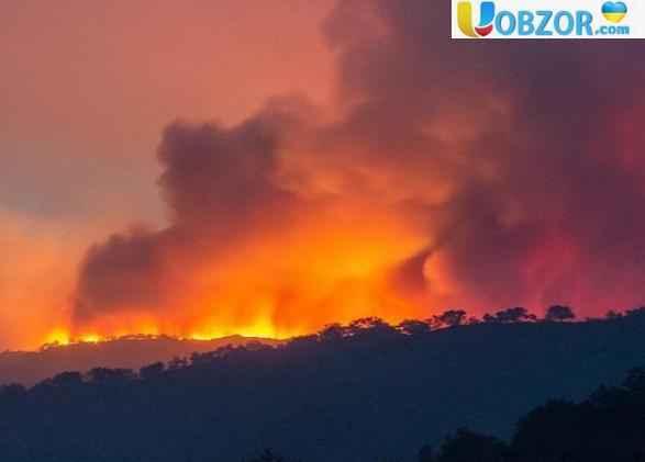 Лісова пожежа в Новій Зеландії: влада евакуювала місцевих жителів