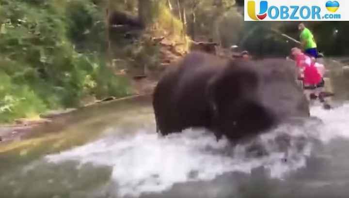 У Таїланді на туристів напав дикий слон. +ВІДЕО