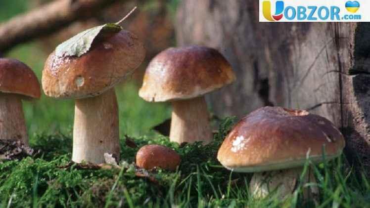 Отруєння грибами в Херсонській області: помер молодий хлопець