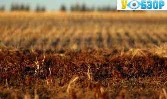 Обмеження щодо продажу землі в одні руки - Разумков