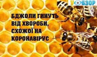 Бджоли гинуть від хвороби, схожої на коронавірус, - вчені