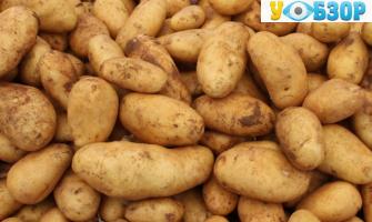 В Україні скоротилося виробництво овочів і картоплі